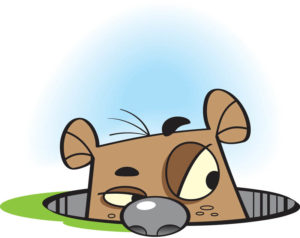 Groundhog-day-clip-art-the-cliparts