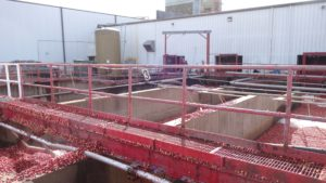 Unloading and Washing Bins for Fresh Cranberries before Entering Cold Storage Facility & Pittsville HS -